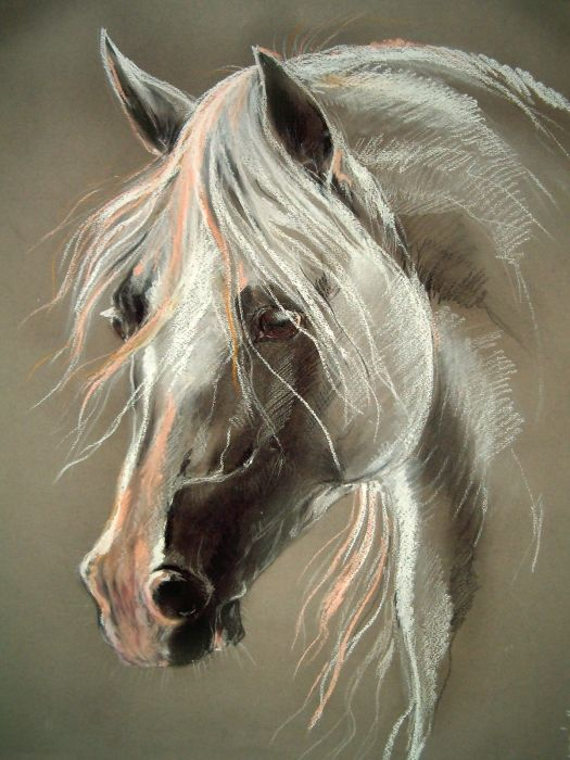 Soft pastels of a beautiful horse's head.