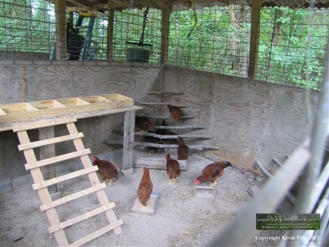 Inside Chicken House 77 best chicken coops images on pinterest | backyard chickens