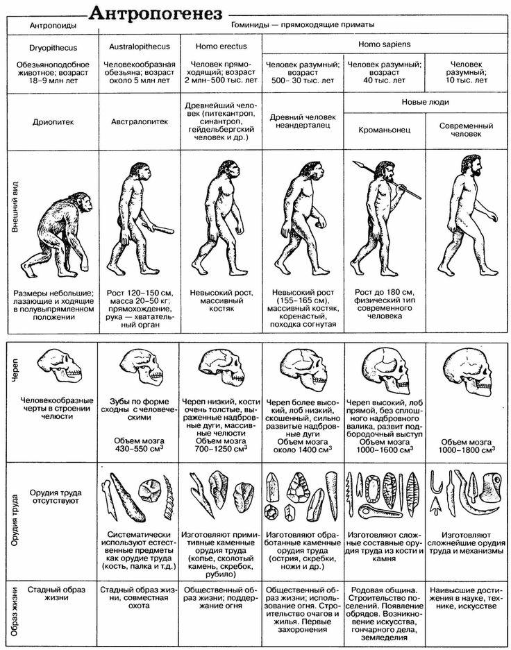 Биология справочник для старшеклассников и поступающих в вузы богданова солодова crfxfnm