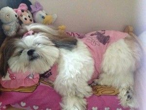 10 Dog Breeds that love to sleep