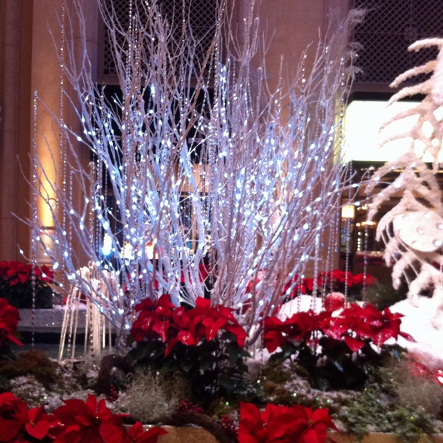 Wedding inspiration...this is Christmas time at the Venetian in Las Vegas.