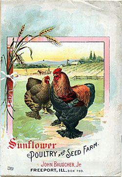 Sunflower Seed Farm