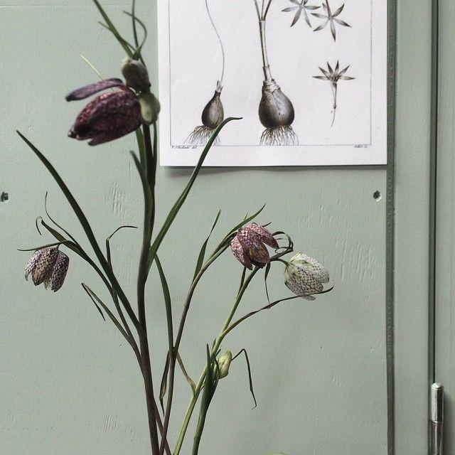 """Mooi bloemetje #fritillaria #flower De groene kleur is """"gezond"""" van Histor   Stylecookie"""