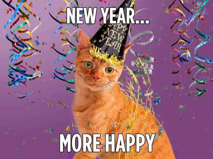 Image result for happy new year animal