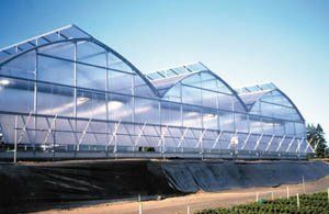 Arch 6500 Commercial Greenhouse - 30' wide x 72' long, 20-30 lb. Load Rating . $27250.00. The gothic arch design of this galvanized steel greenhouse is equally at home as a growing area or sophisticated retail center. The unique, roll-formed components offer unmatched structural integrity and allow the building to be engineered to meet almost any load. 8mm winwall polycarbonate covering.
