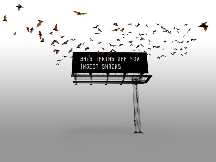 'The Bat Billboard': What Bats are Saying, One Message at a Time - DesignTAXI.com