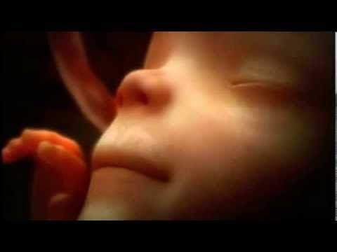 Une vidéo montrant 9 mois de vie dans l'utérus en quelques minutes est à couper le souffle - Santé Nutrition