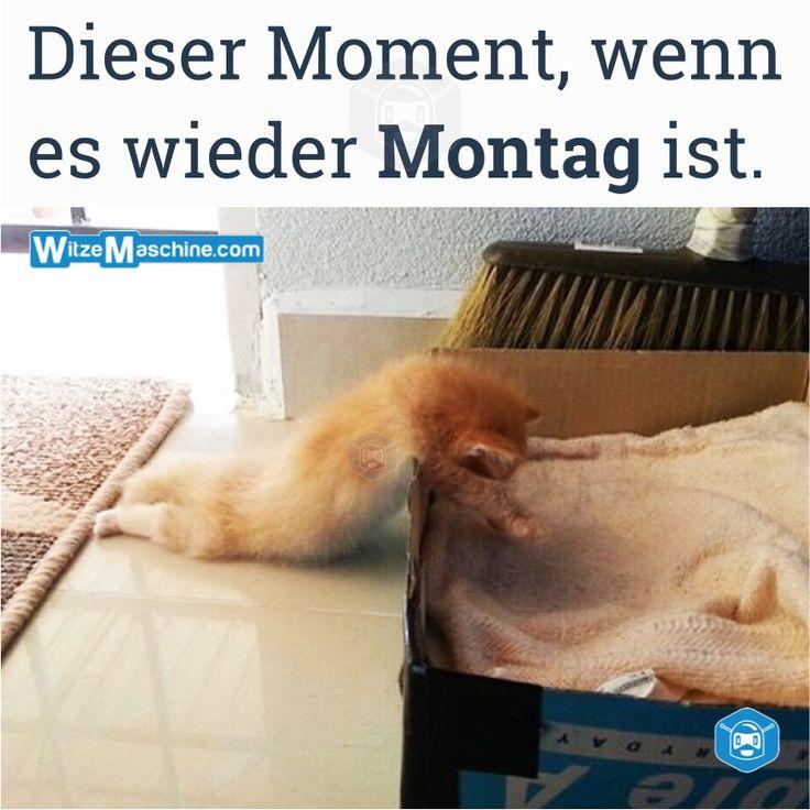 Dieser Moment wenn - Montag Witze - Müde Katze