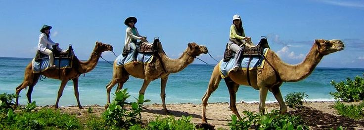 Bali Indonesia Holiday Travels: Camel Riding in Bali Gives Great Experience