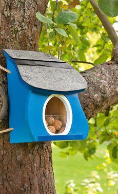 Eichhörnchen könnt ihr mit einem Futterhaus in euren Garten locken. Einfach ein paar Nüsse für die Baumkletterer bereitstellen und sie werden mit Sicherheit am Futterhaus vorbei kommen.