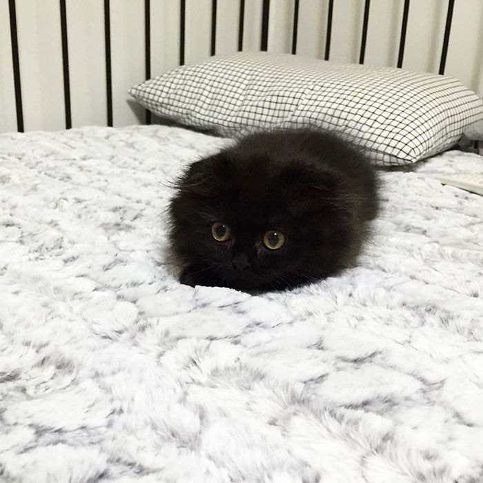 Gimo, o gato dos olhos de gude.
