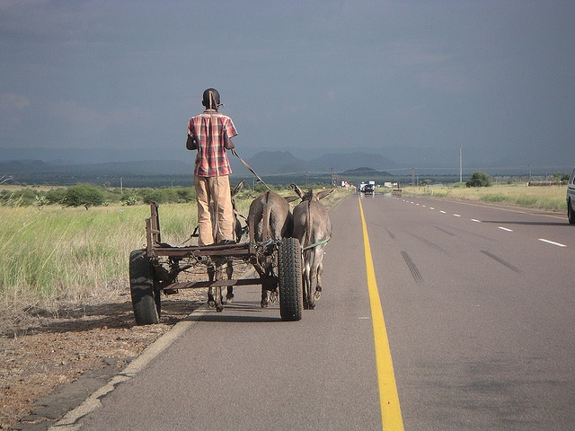 Donkey cart on the road