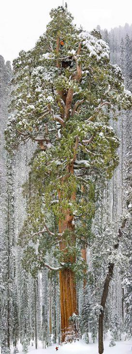 16 Mooiste bomen in de Wereld