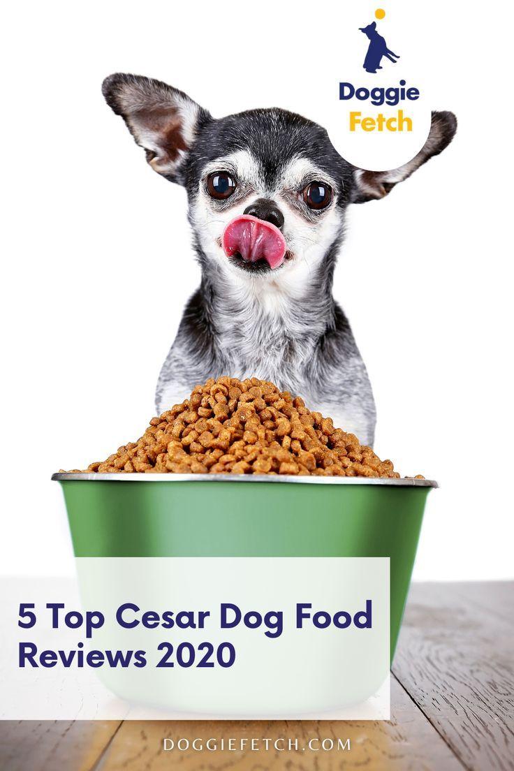 cesar dog food reviews 2021