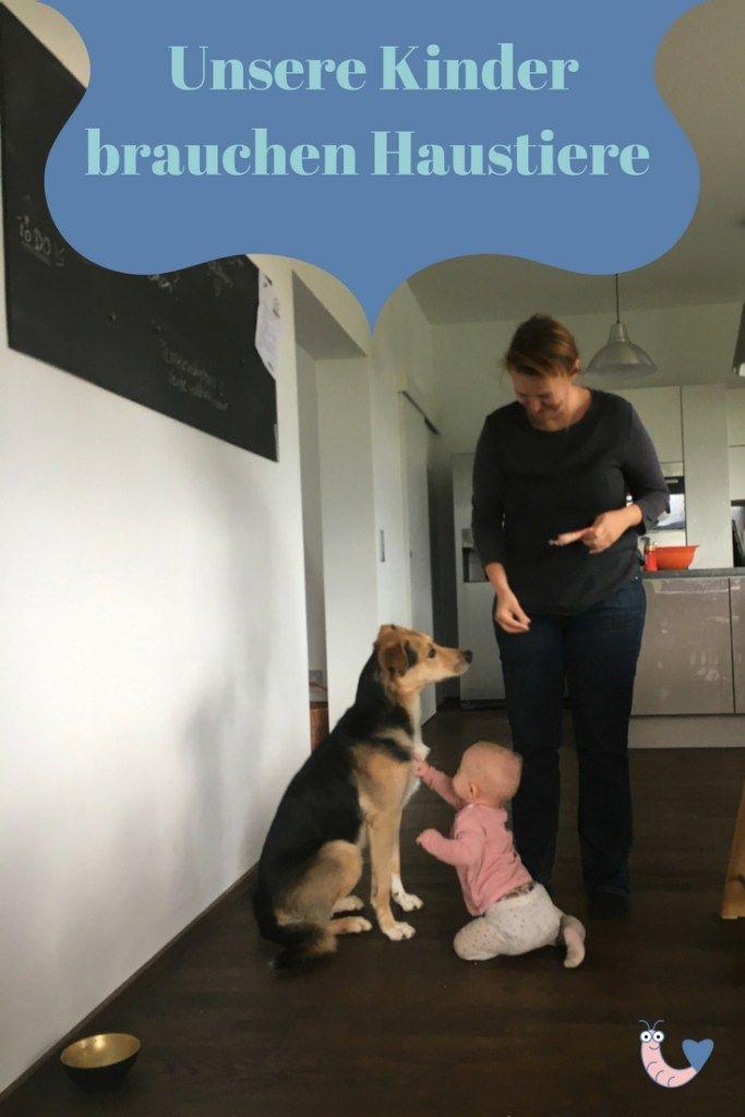 Haustiere Fur Kinder 8 Wichtige Tipps Fur Eltern Und Kinder Haustiere Fur Kinder Haustiere Tiere