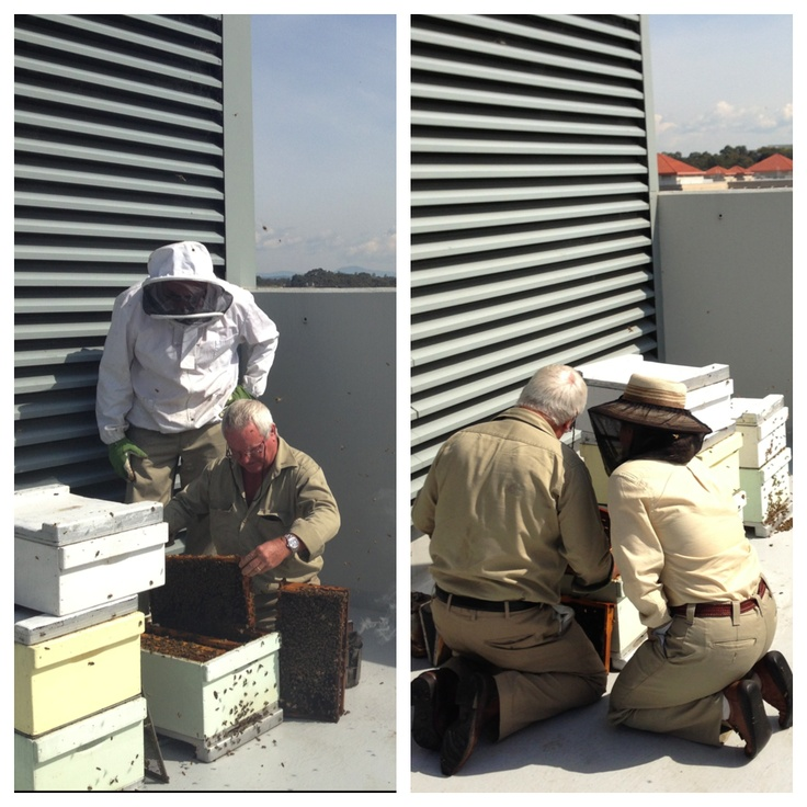 Getting to work: our master beekeeper, my Dad, checks Canberra Urban Honey hives on the rooftop of the Hotel Realm   #rooftop #beekeeeping #urban #agriculture