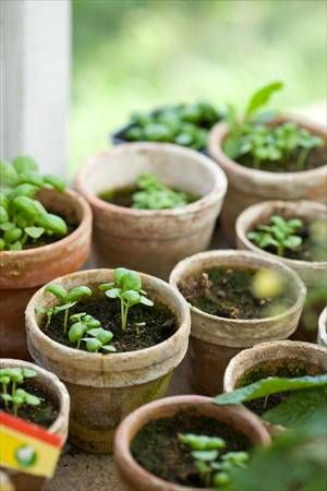 Gardening makes me happy, being with my fingers in soil and watch a seed grown into a plant is magical.  I can truly say that gardening makes my soul happy