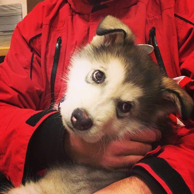 Puppies make our guests luxury list. #MYLUXLIST | Park Hyatt