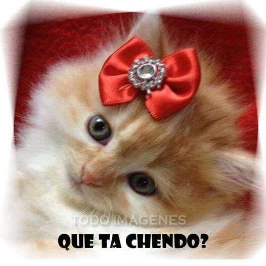 Que ta chendo?   DISTRACCIONES   Pinterest   Fotos de gatitos, Mensajes y  Gato