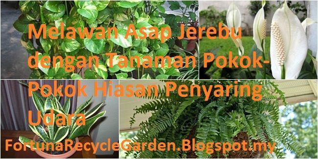 Melawan Asap Jerebu dengan Tanaman Pokok-Pokok Hiasan Penyaring Udara | Fortuna Recycle Garden