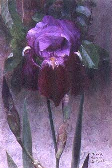 Iris, ca.1895-1902, by Frank Vincent DuMond, who taught Georgia O'Keeffe at the Art Students League in New York   Virginia Museum of Fine Arts, Photo by Katherine Wetzel©