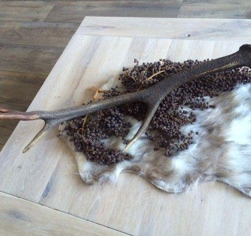 1000 idee n over gewei decoraties op pinterest eland for Wit gewei decoratie