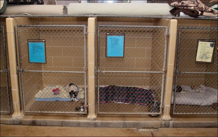 dog kennel designs   Indoor Dog Kennels - Houses Plans - Designs