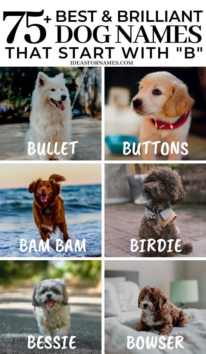 Dogs And Puppies Names Puppies Names Namen Von Hunden Und