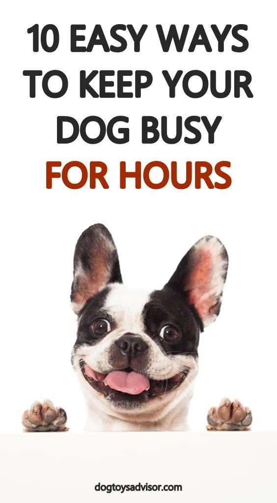 Is Your Dog Bored There Are Loads Of Interactive Dog Toys On The