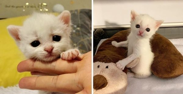 Deaf Kitten Adopted By 2 Deaf Cats His Life Is Forever Changed Kittens Cats Adoption
