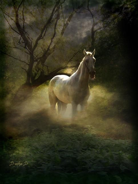 White Horse Fog Mist Forest All The Pretty Horses ️ ️