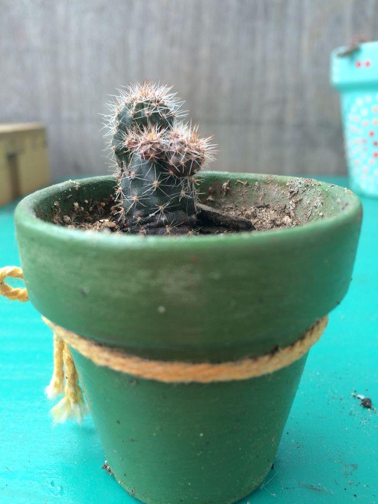 Cactus con hijitos