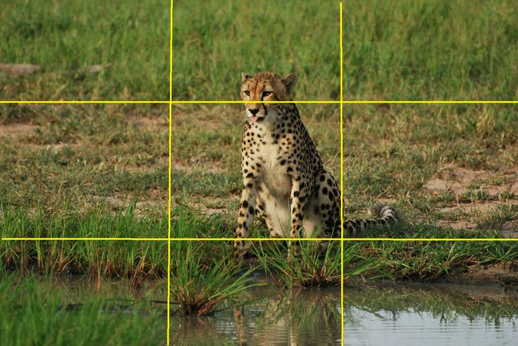 Rule of Thirds-one of the most useful ways of composing photos.
