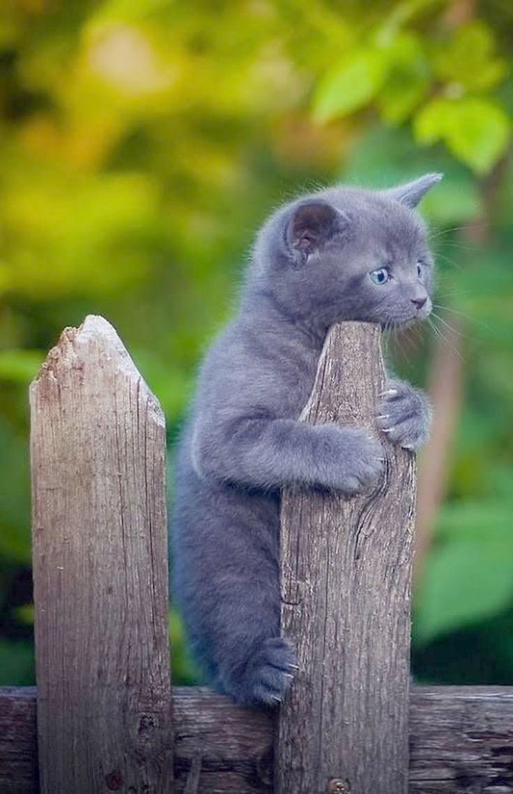 Cute Animals Hugging Concerning Cats And Kittens For Sale Liverpool Cute Cats Kittens Cutest Cute Animals