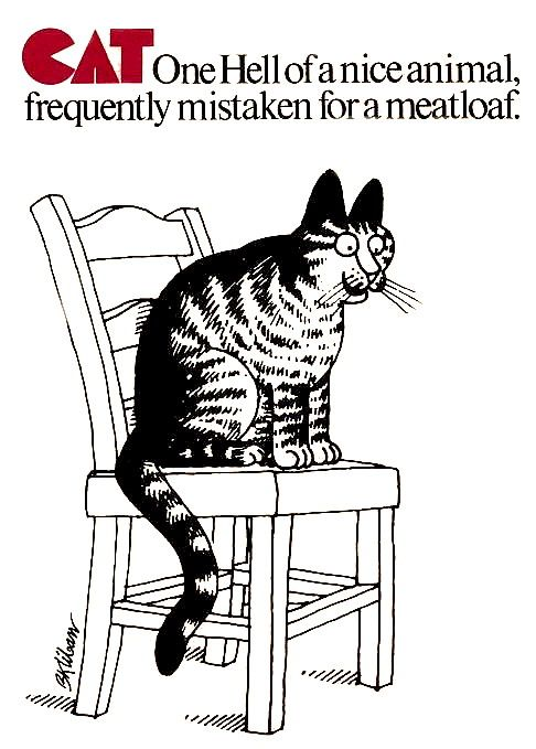 113 Best Bernard Hap Kliban Illustrator Images On Pinterest