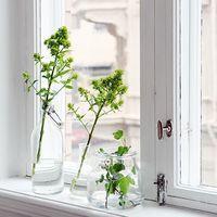 新緑の季節。観葉植物を使って、室内に癒しの空間をつくろう* | キナリノ