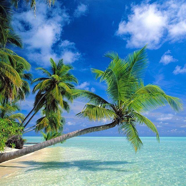 Le Paradis Vous Attend Dans Les Iles Du Bout Du Monde Decouvrez Notre Nouvel Article Sur Le Blog Croisier Hawaii Beaches Maldives Wallpaper Beautiful Beaches