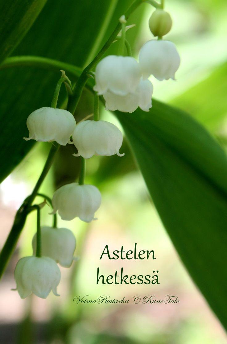 Isot voimakortit roosa-valkoinen lajitelma: 10 erilaista isoa voimakorttia: aiheina roosan ja valkoisen sävyisiä voimapuutarhan kukkia voimalauseiden kera.