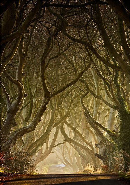 Gary McParland ENTWINED • THE DARK HEDGES, ARMOY, CO ANTRIM    The Dark Hedges is an avenue of 300 year old beech trees situated along Bregagh Road 3 miles from the village of Stranocum. They are a tourist attraction and are photographed regularly.