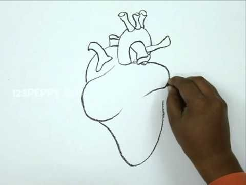 How to Draw a Human Heart: 5 Steps (with Pictures)