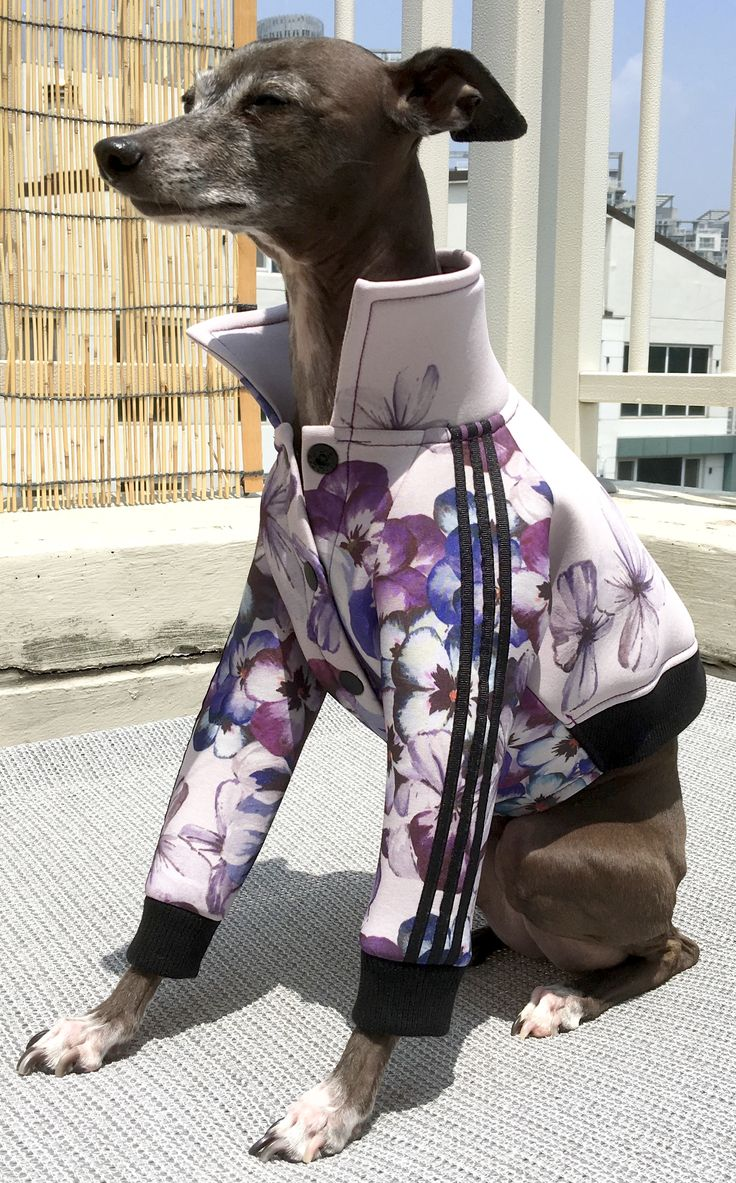 taliangreyhound wear- adidas jersey jacket (DO NOT COPY!!!) model name—roo