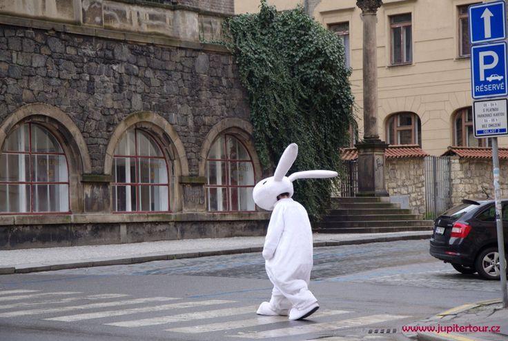 Зайчик в Праге