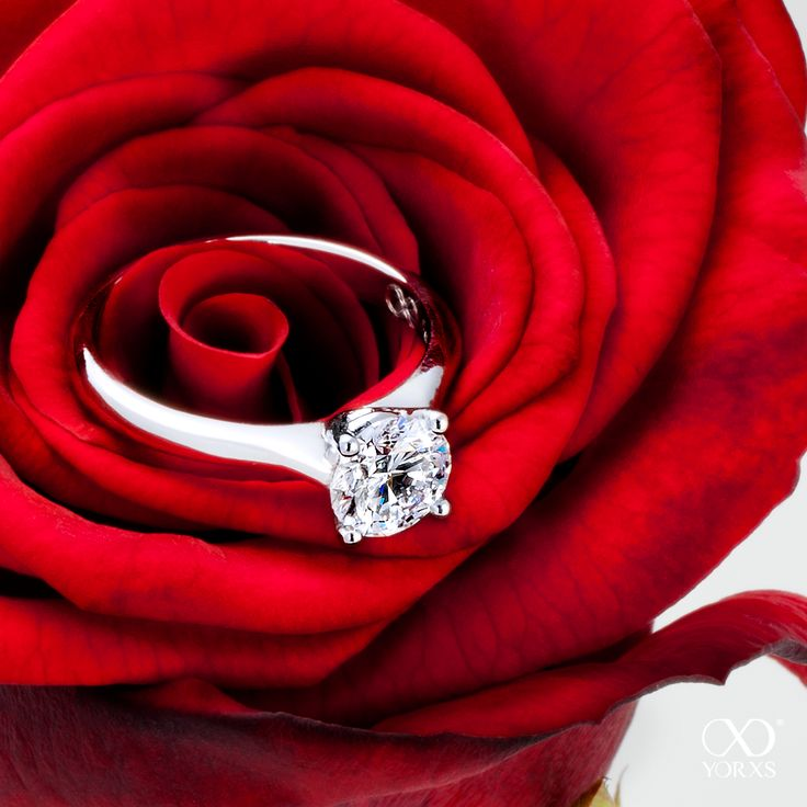 How about a ring in a red rose? The one and only beauty among all the flowers! #rose #liebe #ring #verlobungsring #verlobung diamantring #brillantring #diamanten #zertifiziert #gia #ringkonfigurator #gold #platin #yorxs