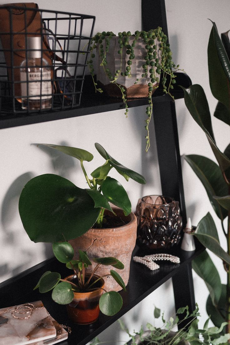 Shelf styling with indoor house plants – [Plant parenthood]