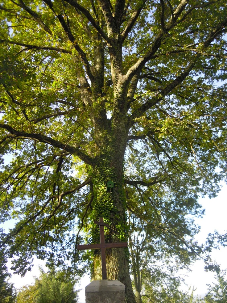 Our centuries old oak tree with bird house and cross to welcome you at Poggio alle Ville