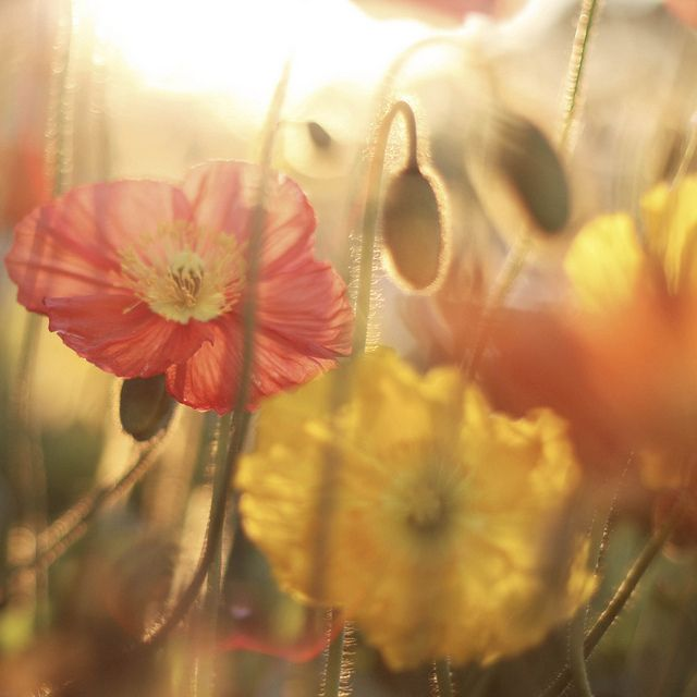 do all things with love by liz.rusby, via Flickr