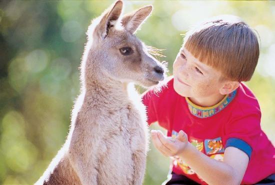 Australian Wildlife Experience at Dreamworld #Australia #Goldcoast http://www.tripadvisor.com.au/ShowForum-g255337-i929-Gold_Coast_Queensland.html