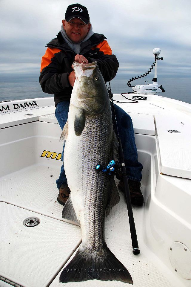 Blaine anderson connecticut 74 pound striped bass vertical for Bass fishing in ct
