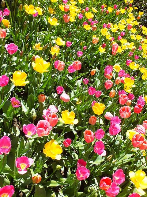 Botanical Gardens - Perth Australia