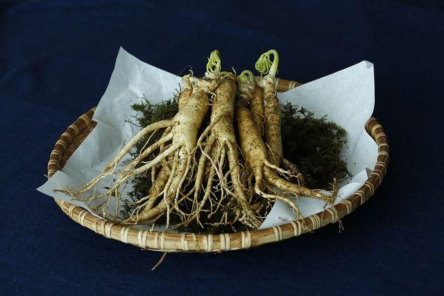 الجنسنغ Ginseng الجنسنغ الحقيقي أو الجنسنج أو الجنسنج الأحمر الكوري باناكس الجينسنغ C A ميير أصله يوجد في Herbalism Herbal Medicine Diabetes Remedies